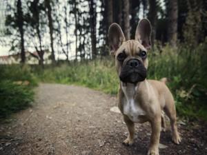 Pequeño perro en el camino del bosque