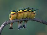 Coloridos pájaros posados en una rama