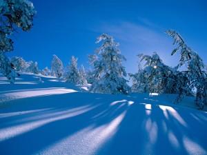 Rayos de sol sobre la nieve