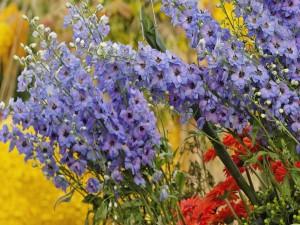 Postal: Flores de varios colores en un jardín