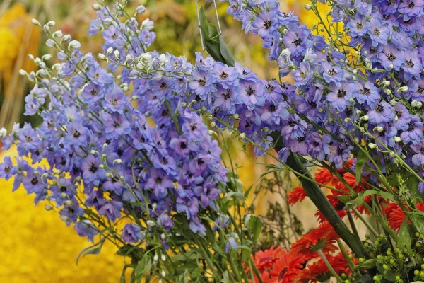 Flores de varios colores en un jardín