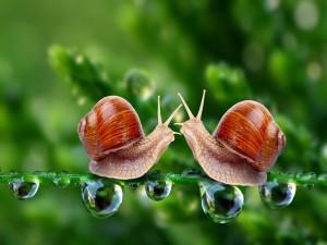 Dos caracoles sobre una rama con gotas de agua