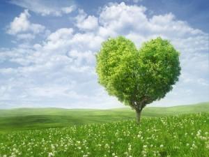 Árbol en forma de corazón en un prado verde