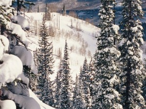 Postal: Vista del telesilla entre los pinos