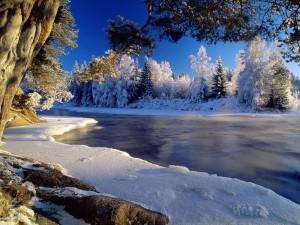 Árboles nevados en la orilla de un río