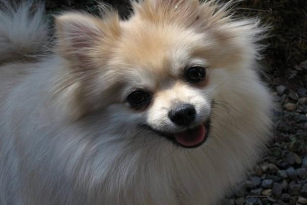 Encantador perro con pelo blanco