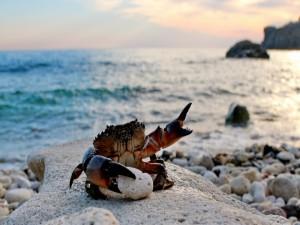 Postal: Un llamativo cangrejo sobre una piedra