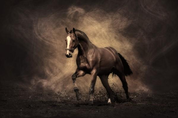 Un musculoso caballo marrón