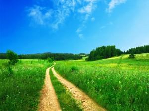 Postal: Camino en un bello campo verde
