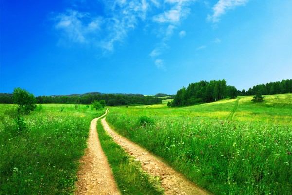 Camino en un bello campo verde