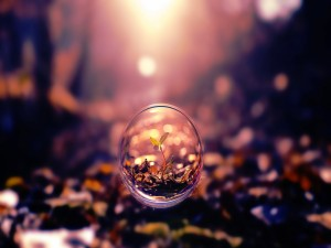 Postal: Un brote verde creciendo dentro de la burbuja