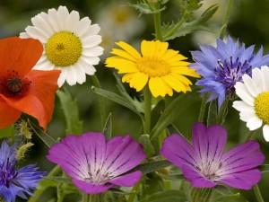 Unas bonitas flores variadas