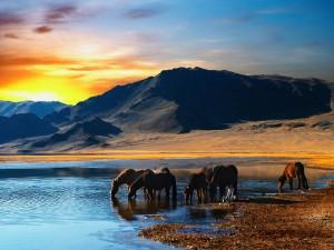 Caballos bebiendo agua de un lago al atardecer