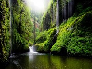 Cascadas entre plantas y árboles