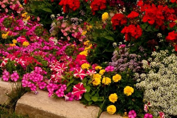 Delicadas flores de una gran variedad de colores en un jardín