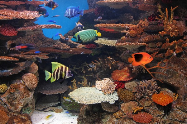 Fondo marino con bellos peces de colores