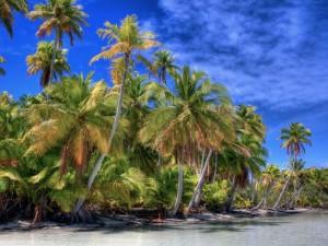 Postal: Sensacionales palmeras a orillas del mar