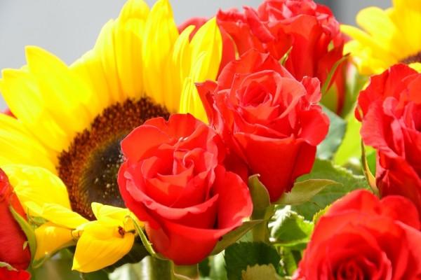 Girasoles y rosas rojas