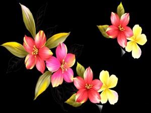 Atractivas flores en fondo negro