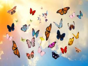 Conjunto de espectaculares mariposas multicolores