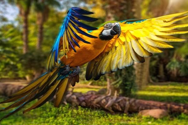 Bonito loro con sus alas desplegadas