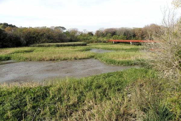 Reserva ecológica en la costa del Río de la Plata (Buenos Aires)