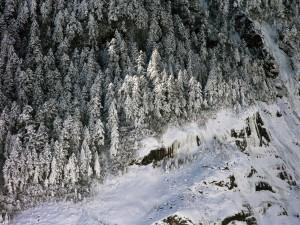 Postal: Vista aérea de los árboles cubiertos de nieve