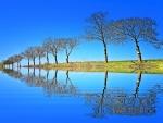 Fila de árboles reflejados en el agua
