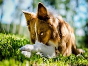 Un bello perro tumbado en la hierba