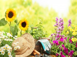Postal: Flores y elementos para arreglar el jardín