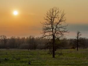 Postal: Amanecer en el bosque