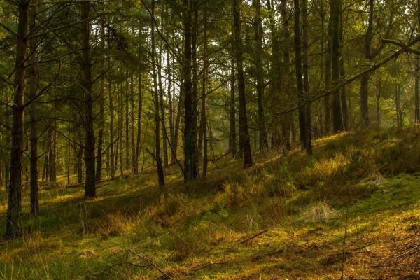 Pinos y ramas en el bosque