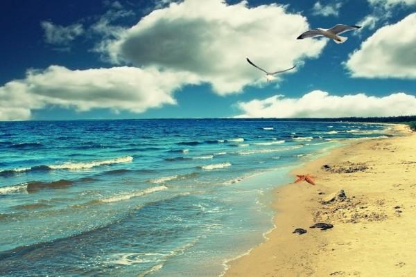 Tortugas, estrella de mar y gaviotas sobre la orilla