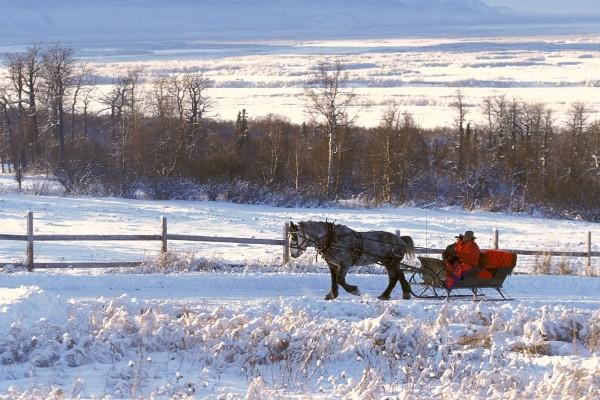 Un caballo tirando de un trineo por la nieve