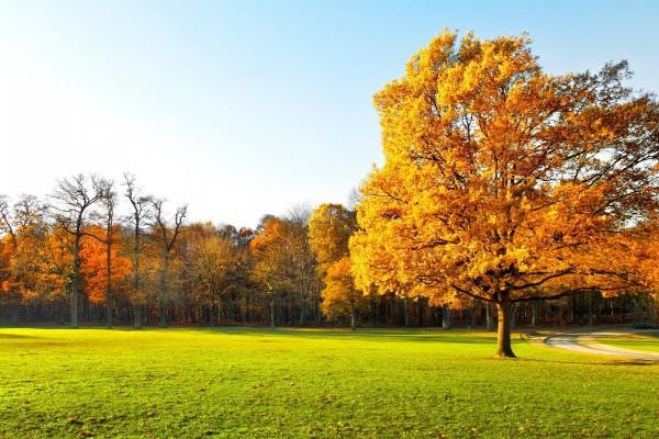 Bonitos árboles otoñales sobre la hierba verde