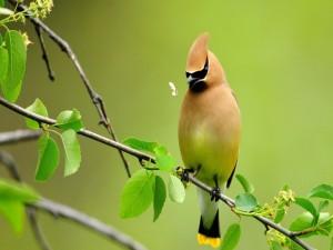 Postal: Pájaro abriendo el pico para atrapar al insecto