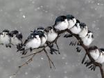 Copos de nieve cayendo sobre unos pájaros posados en una rama