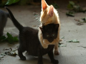 Postal: Un gran abrazo entre dos gatitos