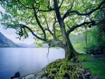 Árbol con grandes raíces en la orilla del lago