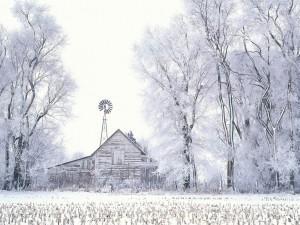 Campo y árboles cubiertos de nieve
