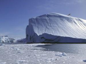 Ave volando cerca del iceberg