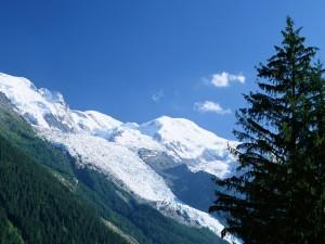 Postal: Un gran pino y las montañas