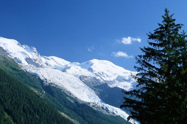 Un gran pino y las montañas