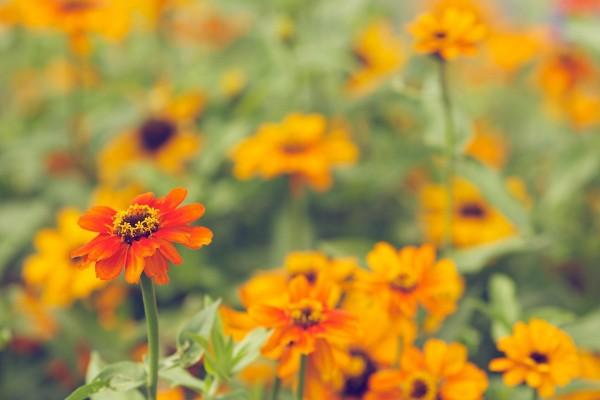 Bonitas flores de color naranja en verano