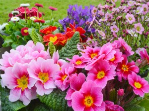 Flores muy coloridas en el jardín