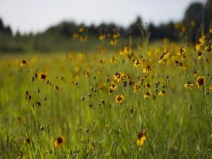 Campo con flores silvestres y hierba