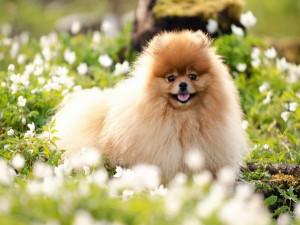 Un perrito peludo entre las flores