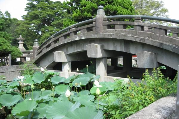 Flores de loto bajo el puente