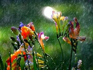 Postal: Lluvia veraniega sobre las flores