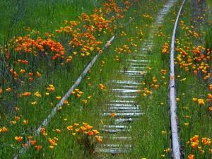 Postal: Flores y hierba cubriendo una vía de tren